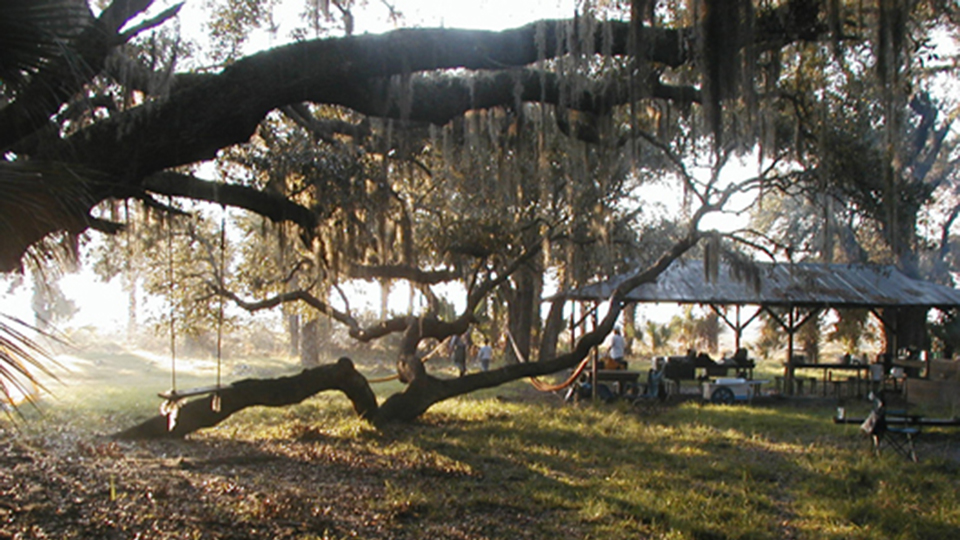 people gathered at an open pavilion by the beach. there is a rope swing in the foreground