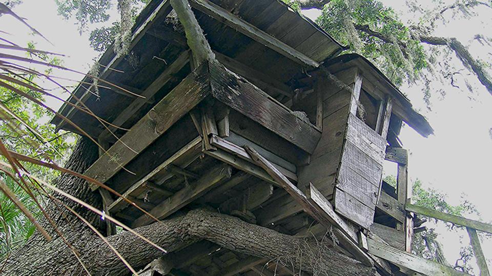 Genesis treehouse