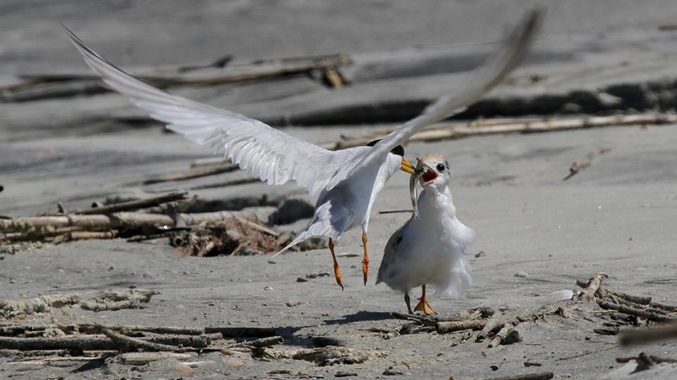 Ossabaw Island Foundation   Birds