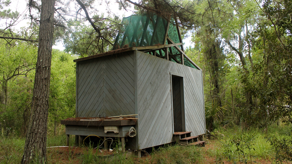 a small modern-looking cabin set among trees
